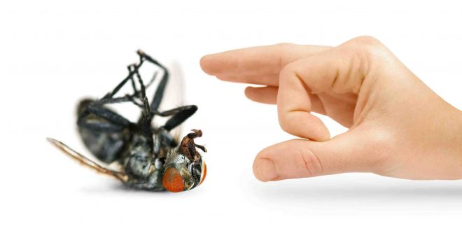 مكافحة الحشرات المنزلية 0555996952