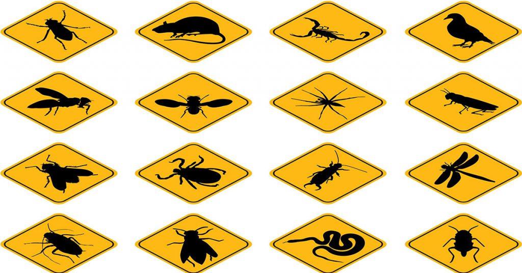 نتيجة بحث الصور عن شركة مكافحة حشرات بجدة