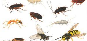 حشرات المنزل