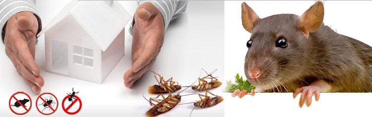 افضل شركة مكافحة حشرات ورش مبيدات بجدة